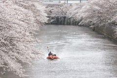 De Bloesems van de kers in Tokyo stock foto