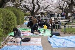 De Bloesems van de kers in Tokyo stock afbeeldingen