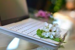 De bloesems van de kersenboom op wit toetsenbord De lente in bureau Royalty-vrije Stock Foto