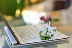 De bloesems van de kersenboom op wit toetsenbord De lente in bureau Stock Foto