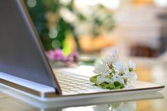 De bloesems van de kersenboom op wit toetsenbord De lente in bureau Stock Afbeelding