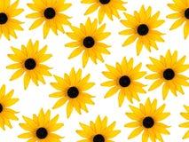 De bloesems van Rudbeckia op witte achtergrond Stock Foto