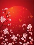 De bloesems van Sakura Royalty-vrije Stock Foto