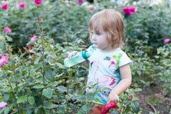 De blonde rozen van het kindwater in de tuin Royalty-vrije Stock Foto's