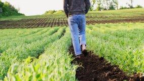 De blootvoetse landbouwer gaat ter plaatse onder de erwtenbedden stock video