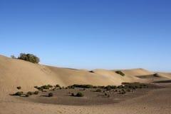De bodem van duinen met struiken met duidelijke blauwe hemel Royalty-vrije Stock Afbeeldingen