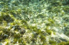 De bodem van het Middenoverzees stock foto