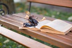 De boekbrandwonden Stock Foto