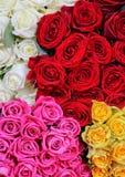 De boeketten van rozen Stock Fotografie