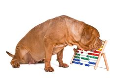 De Boekhouding van de hond Royalty-vrije Stock Afbeeldingen