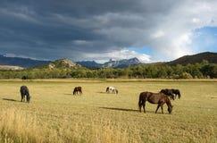 De Boerderij van het bergpaard Stock Fotografie
