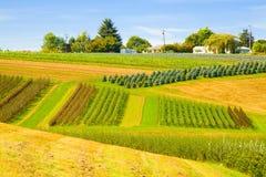 De Boerderij van het Landbouwbedrijf van de boom met Huis royalty-vrije stock afbeelding