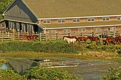 De Boerderij van het paard Stock Afbeelding