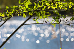 De Bokehbezinningen over meer, springen jonge bladeren op Stock Foto's