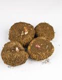 De bol van begonia's Stock Afbeelding