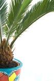 De bol van Cycas in een bloempot Stock Afbeelding