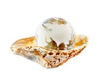De bol van de aarde in een zeeschelp Stock Afbeeldingen
