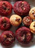 De bollen van gladiolen Royalty-vrije Stock Foto