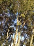 De bomen Stock Afbeeldingen