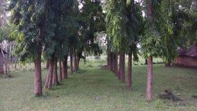De bomen Stock Afbeelding