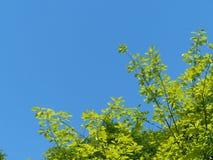 De bomen Royalty-vrije Stock Afbeeldingen