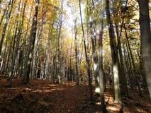 De bomen in de aard kunnen verbazend zijn en met zonneschijn kunnen schoonheid zijn Stock Afbeeldingen