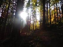 De bomen in de aard kunnen verbazend zijn en met zonneschijn kunnen schoonheid zijn Royalty-vrije Stock Fotografie