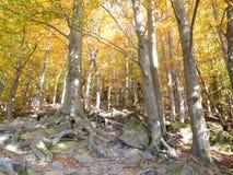 De bomen in de aard kunnen verbazend zijn en met zonneschijn kunnen schoonheid zijn Stock Fotografie