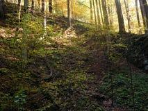 De bomen in de aard kunnen verbazend zijn en met zonneschijn kunnen schoonheid zijn Stock Afbeelding