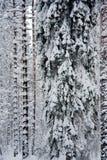 De bomen behandelde sneeuw royalty-vrije stock afbeelding
