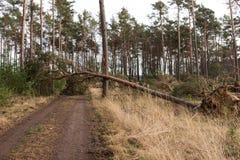De bomen blokkeren de bosweg na het onweer stock afbeelding