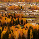 De bomen in de herfst Stock Foto's
