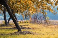 De bomen doorbladert het landschapsfotografie van het de herfstseizoen Royalty-vrije Stock Afbeeldingen