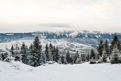 De bomen en de bergen van de pijnboom die in sneeuw worden behandeld Stock Afbeeldingen