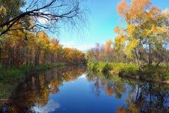 De bomen en de bezinning van de herfst in water Stock Foto's