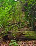 De bomen en de installaties van het regenwoud stock fotografie