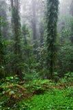 De bomen en de installaties van het regenwoud royalty-vrije stock fotografie