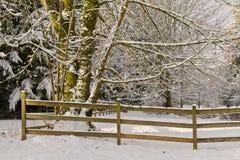 De bomen en de sneeuw drijven omheining bijeen stock afbeelding