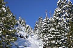 De Bomen en de Sneeuw van meertahoe stock afbeeldingen