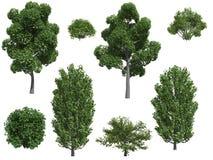 De bomen en de struiken van de populier Royalty-vrije Stock Fotografie