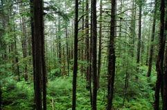 De Bomen en de Vegetatie van het regenwoud stock afbeelding