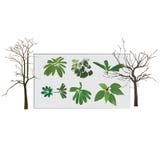 De bomen en doorbladert Stock Fotografie