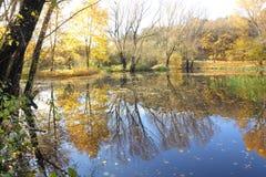 De bomen en het meer van de herfst Stock Foto's