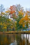 De bomen en het meer van de herfst Stock Foto