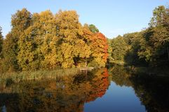 De bomen en het meer van de herfst Stock Afbeelding