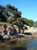 De bomen en het overzees van de pijnboom Stock Afbeelding