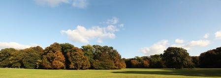 De bomen en het zonlicht van het gazon tijdens dalingspanorama Royalty-vrije Stock Afbeelding