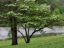 De bomen en vijver 2016 van Wenen Royalty-vrije Stock Foto