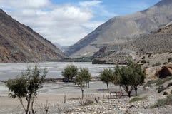 De bomen groeien op de banken van Kali Gandaki River in Dolna van de Himalayan-Bergen nepal Stock Fotografie