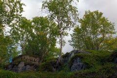 De bomen groeien op de rotsen in de toendra stock afbeeldingen